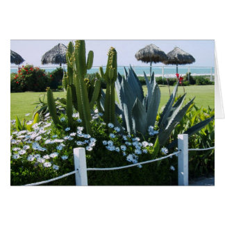 Cartes Cactus au Mexique, plage de Rosarito