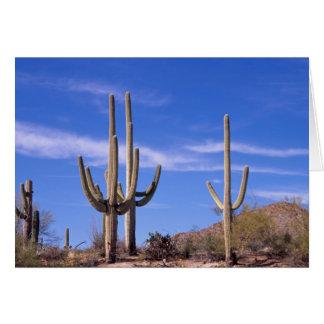 Cartes Cactus géant armé multi de Saguaro, Saguaro