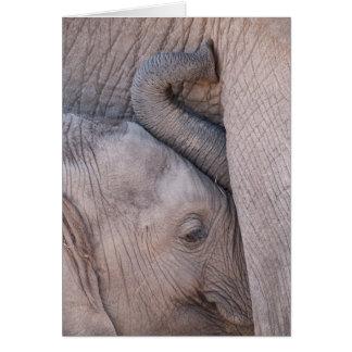 Cartes Câlins d'éléphant de bébé