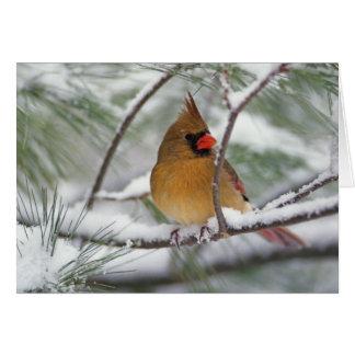 Cartes Cardinal du nord féminin dans le pin neigeux,