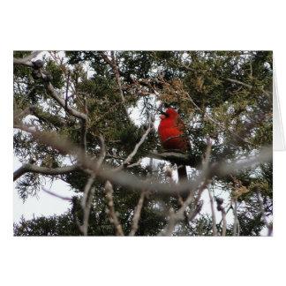Cartes Cardinal et cèdre