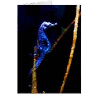 Cartes CB bleus d'hippocampe