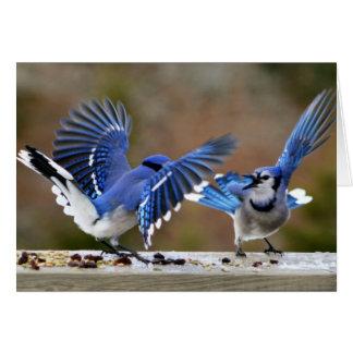 Cartes Chamailleries de Blue Jays pendant le déjeuner