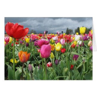 Cartes Champ de tulipes