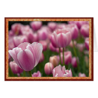 Cartes Champ des tulipes roses