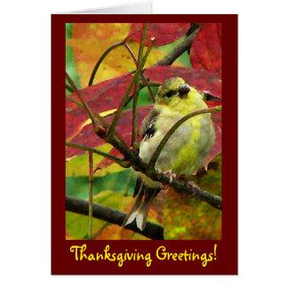 Cartes Chardonneret dans le thanksgiving d'automne