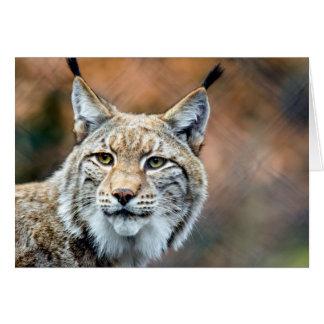 Cartes Chat de prédateur de faune de chat sauvage de Lynx