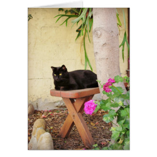 Cartes Chat noir dans le jardin