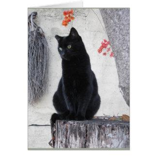Cartes Chat noir élégant avec la bouganvillée orange