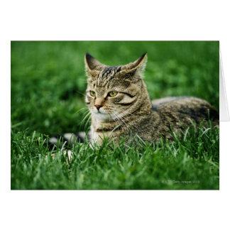 Cartes Chat se situant dans l'herbe