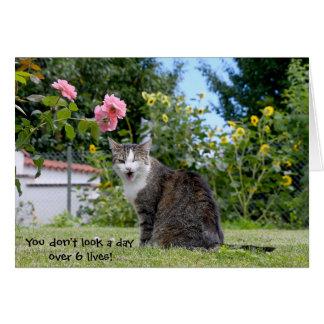Cartes chat tigré d'anniversaire humoristique