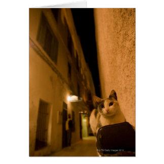 Cartes Chaton au crépuscule, Maroc