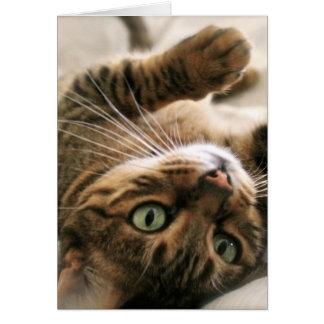 Cartes Chaton mignon de chat du Bengale repéré par Brown