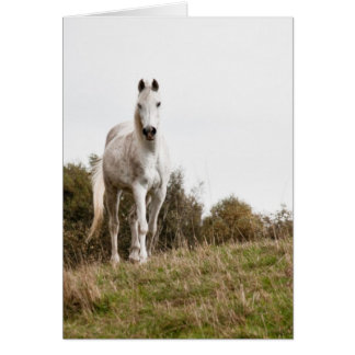 Cartes Cheval blanc