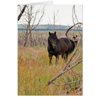 Cartes cheval sauvage dans le MESA Verde