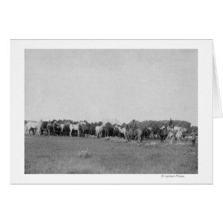 Cartes Chevaux arrondis par la photographie de cowboys