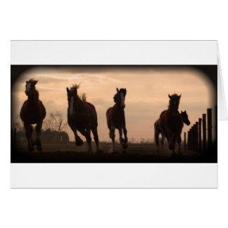 Cartes chevaux au paysage de coucher du soleil