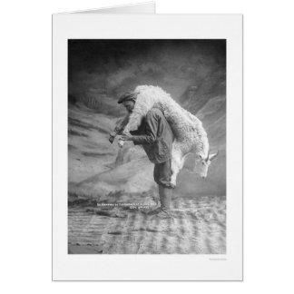 Cartes Chèvre de transport Alaska 1905