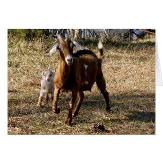 Cartes Chèvres adorables