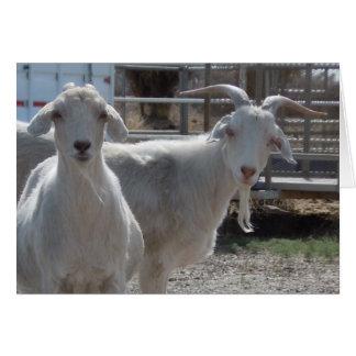 Cartes Chèvres drôles de joyeux anniversaire