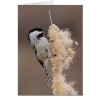 Cartes Chickadee Noir-couvert