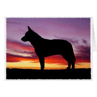 Cartes Chien australien de bétail