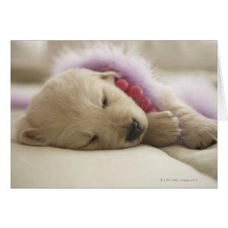 Cartes Chien dormant sur le lit