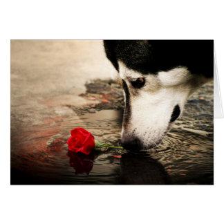 Cartes Chien et rose rouge