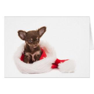 Cartes chihuahua chiot christmas card