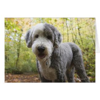 Cartes Chiot anglais de chien de berger dans la forêt