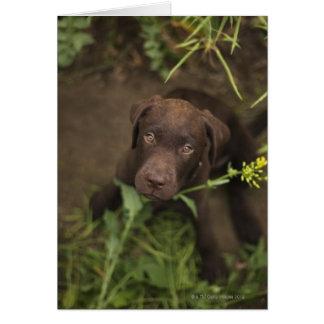 Cartes Chiot de Labrador se reposant dans l'herbe