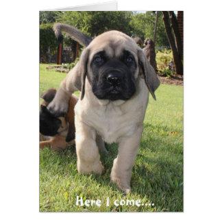 Cartes Chiot de mastiff venant pour vous souhaiter un