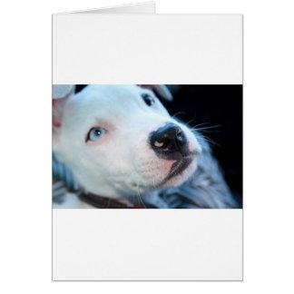Cartes Chiot de Pitbull de bébé
