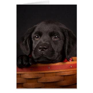 Cartes Chiot noir de labrador retriever dans un panier