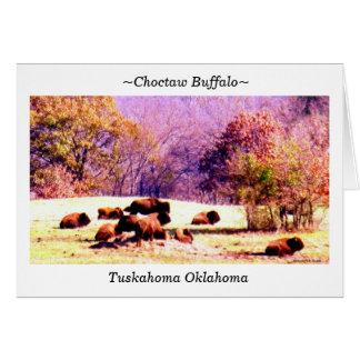 Cartes ~Choctaw Buffalo~