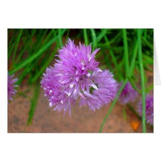 Cartes Ciboulette avec les fleurs pourpres de fleur