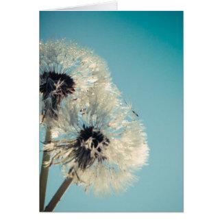 Cartes Ciel bleu de pissenlit