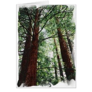Cartes Ciel de séquoia