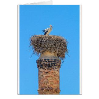 Cartes Cigogne adulte dans le nid sur chimney.JPG