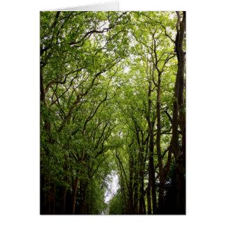 Cartes Cimes d'arbre