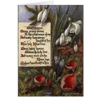 Cartes Circa 1890 : Perce-neiges