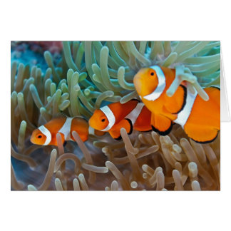 Cartes Clownfish