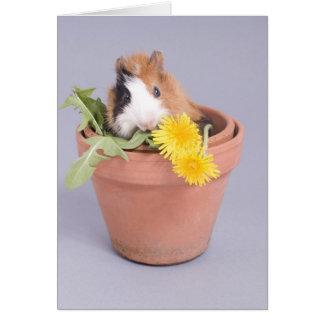 Cartes cobaye dans un pot de fleurs