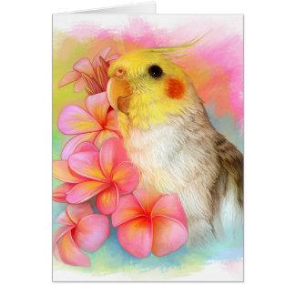 Cartes Cockatiel avec le frangipani