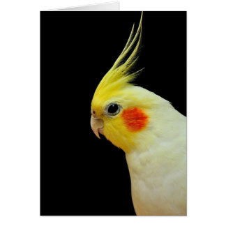 Cartes Cockatiel de Lutino