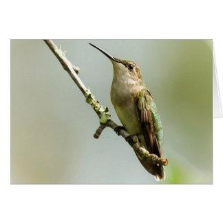Cartes Colibri Rubis-throated femelle