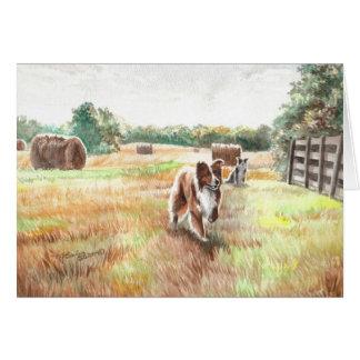 Cartes Colleys de frontière - chiens de ferme