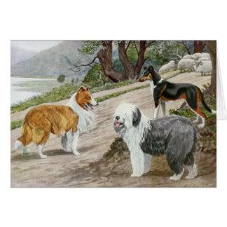 Cartes Colleys vintages et un chien de berger,
