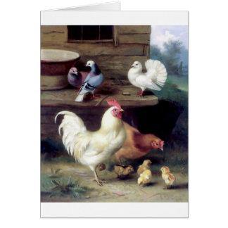 Cartes Colombes de poulet de poule de coq