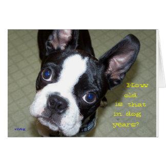 Cartes Combien vieux pendant des années de chien ?